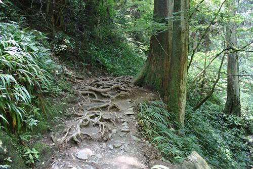 露出した木の根。