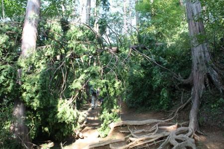 倒木の写真