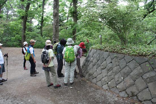 石垣に住んでいた生き物の痕を観察しています。