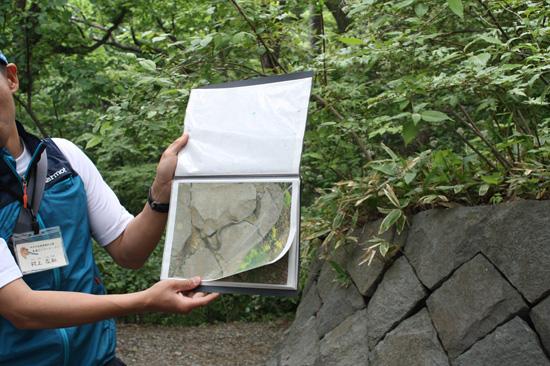 アオダイショウがヒガラの巣を襲っている写真。