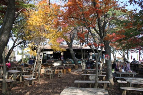 紅葉の木の下で腰掛けて食事をするのは最高です。
