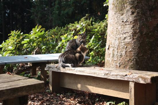 写真を撮った日は、2匹の猫ちゃんがいました。