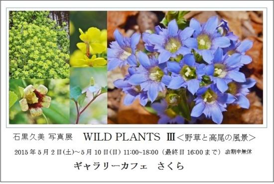 個展 WILD PLANTS IIIの告知ハガキ