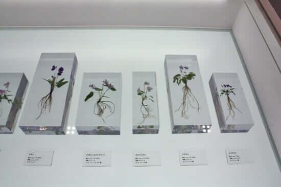 高尾で見られる植物が展示されています。