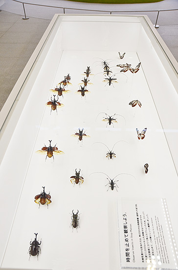 カブトムシや蝶の飛ぶ姿を観察できるダイナミックな展示。