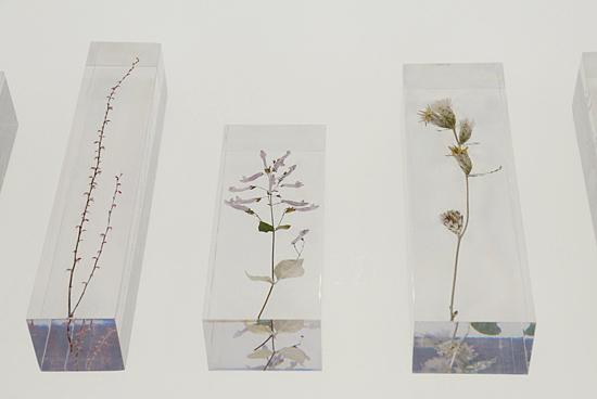 高尾山に自生する植物をアクリルに封入して展示。