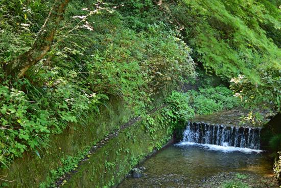 スタートすぐは川のせせらぎに癒されます。 ここら辺はまだまだ夏のようです。
