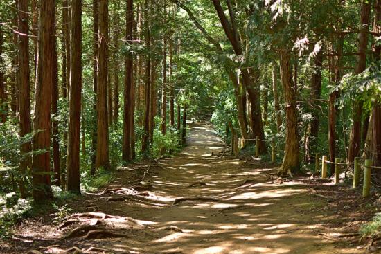 緑のトンネルは本当に癒されます。木漏れ日がいい感じです。