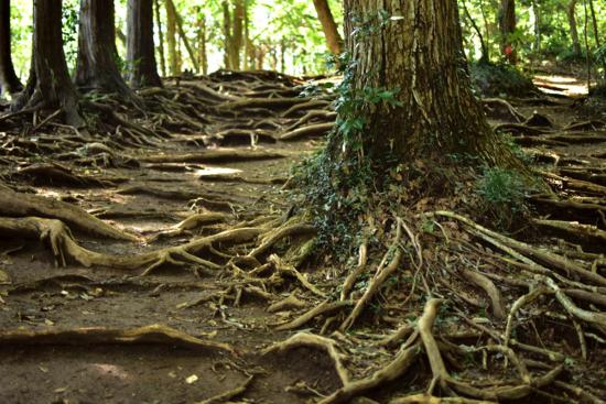 雨の後は特に木の根は滑りやすいのでご注意ください。