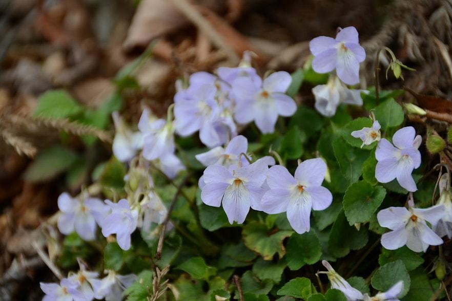 高尾山の花カバー写真