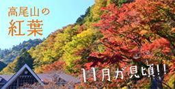 高尾山の紅葉。11月中旬からが見頃