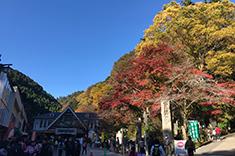 ケーブルカー清滝駅前の紅葉の写真