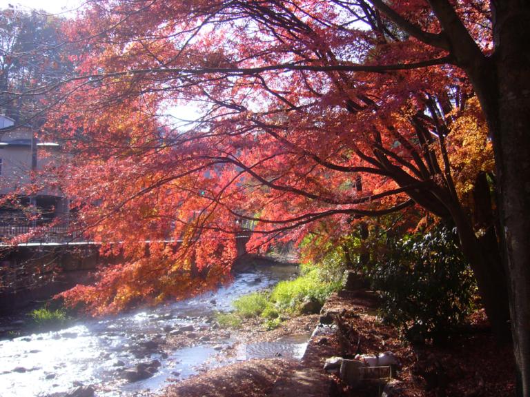 案内川沿いの紅葉